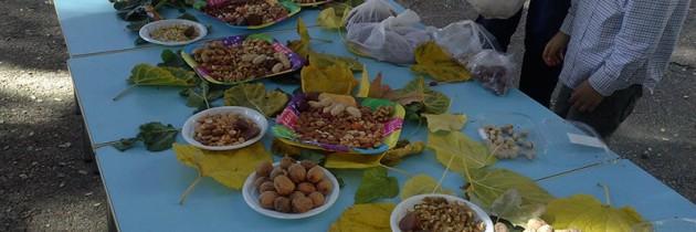 Coronas de otoño y fiesta de frutos secos